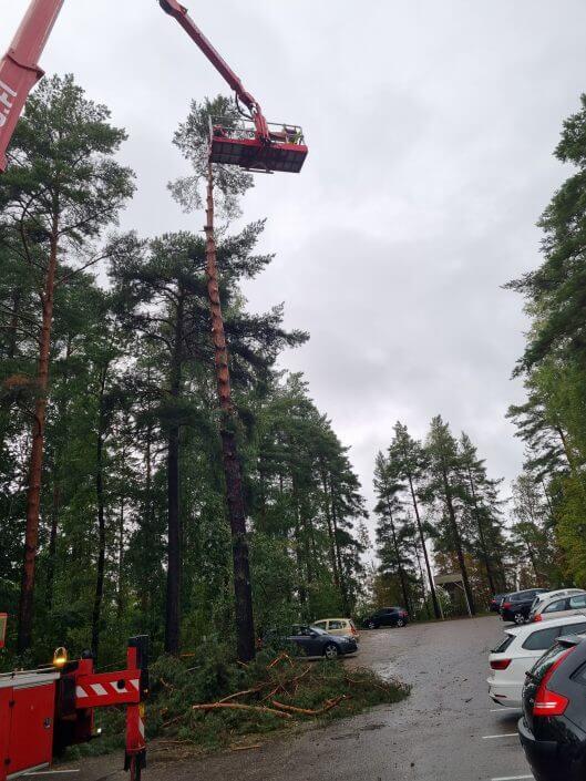 puiden kaato